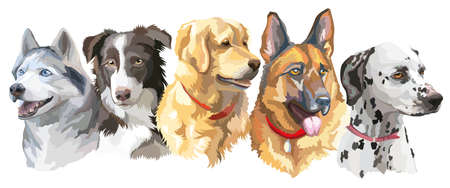 큰 크기 강아지 품종 (시베리안 허스키, 국경 콜 리, 골든 리트리버, 독일 셰퍼드; dalmatian)의 화려한 벡터 초상화의 흰색 배경에 고립 된 집합