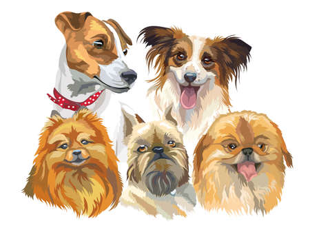 Set of colorful vector portraits of small size dog breeds (jack Russel terrier, papillon, small pomeranian, brussels griffon; Pekingese) isolated on white background