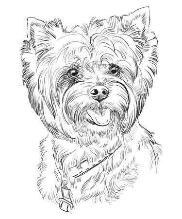 Vector el retrato de Yorkshire Terrier en la ilustración del dibujo de la mano del color negro en el fondo blanco Foto de archivo - 81236273