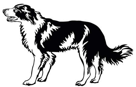 Decorative portrait of standing in profile dog border collie, vector isolated illustration in black color on white background Stock Illustratie