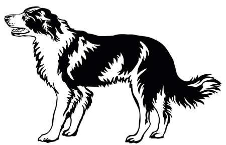 Decoratief portret van staande in profiel hond grens collie, vector geïsoleerde illustratie in zwarte kleur op witte achtergrond