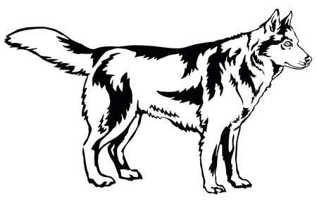 Decoratieve portret van staande in profiel hond Siberische Husky, vector geïsoleerde illustratie in zwarte kleur op witte achtergrond