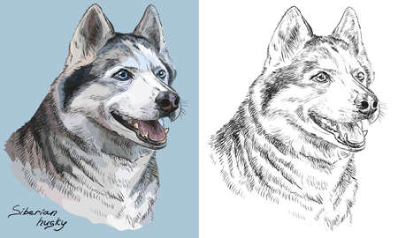 Colored siberian husky portrait on blue background and and black color on white background vector hand drawing illustration