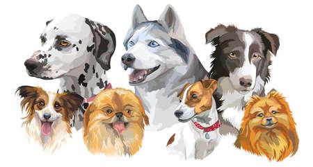 Conjunto de coloridos retratos vectoriales de razas de perros (husky siberiano, border-collie, dalmatian, Jack Russel terrier, papillon, pequeño pomeranian, Pekinés) aisladas sobre fondo blanco Foto de archivo - 81999683