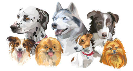 Set of colorful vector portraits of dog breeds (siberian husky, border-collie; Dalmatian, jack Russel terrier, papillon, small pomeranian,Pekingese) isolated on white background
