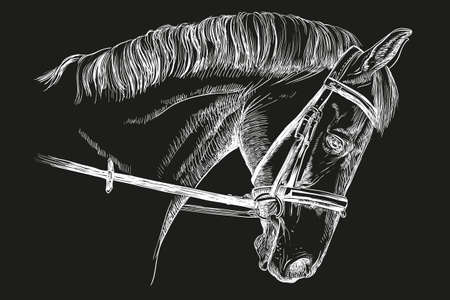 Isolated horse head with bridle in white color vector hand drawing illustration on black background Illustration