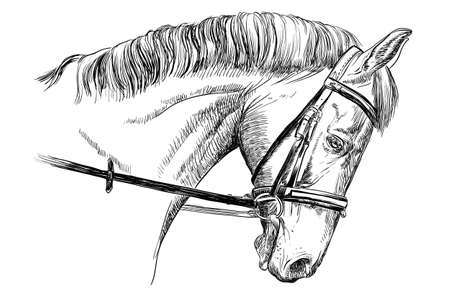 白い背景の上の図を描く黒い色ベクトル手に手綱を孤立した馬の頭