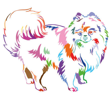 Decorative portrait of standing in profile dog breed Spitz (Pomeranian), vector isolated illustration in different colors on white background