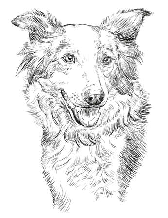 Border collie vector isolated hand drawing illustration in black color on white background Stock fotó - 82407717