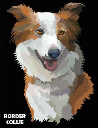Gekleurde Border collie geïsoleerd vector portret op zwarte achtergrond Stock Illustratie