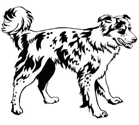 Decorative portrait of standing in profile dog border collie, vector isolated illustration in black color on white background Illusztráció