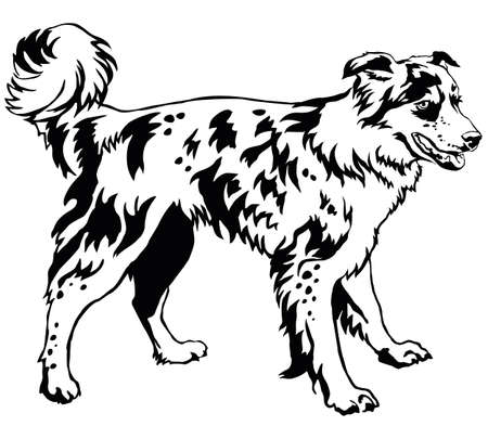 Decorative portrait of standing in profile dog border collie, vector isolated illustration in black color on white background Illustration