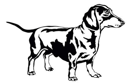 Decorative portrait of standing in profile dog dachshund, vector isolated illustration in black color on white background Vettoriali