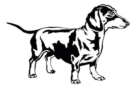 Retrato decorativo de pie en el perro salchicha de perfil, vector ilustración aislada en color negro sobre fondo blanco. Ilustración de vector