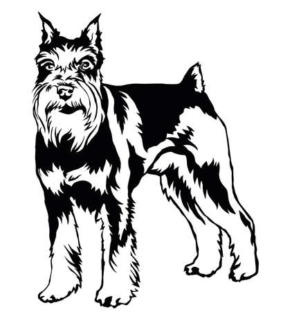 Decorative portrait of standing in profile dog Miniature Schnauzer, vector isolated illustration in black color on white background Ilustracja
