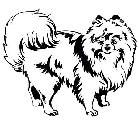 Decorative portrait of standing in profile dog breed Spitz (Pomeranian), vector isolated illustration in black color on white background Stock Illustratie