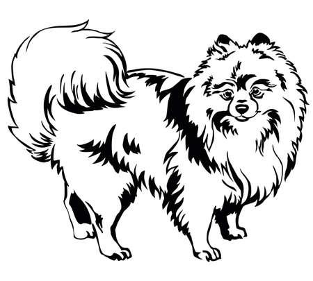 Retrato decorativo de pie en perfil perro raza Spitz (Pomerania), vector ilustración aislada en color negro sobre fondo blanco