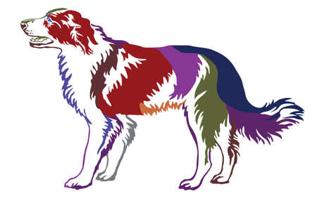 Decorative contour portrait of standing in profile dog border collie,colorful vector isolated illustration on white background