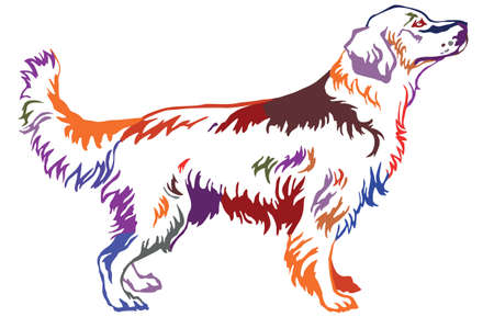 Decorative contour portrait of standing in profile dog golden retriever, colorful vector isolated illustration on white background