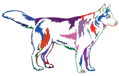 Decorative contour portrait of standing in profile dog Siberian husky, colorful vector isolated illustration on white background Stock Vector - 82890901