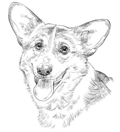 Vector outline portrait of Pembroke Welsh Corgi in black color hand drawing Illustration on white background