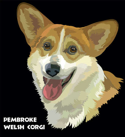 Colored Pembroke Welsh Corgi, isolated vector portrait on black background