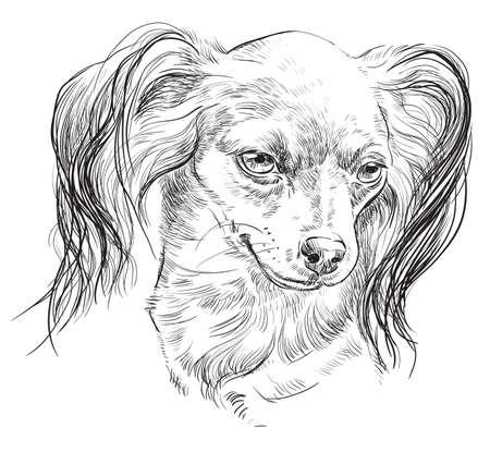 黒い色でロシアン ・長髪トイ ・ テリアのベクトル アウトラインの肖像手白い背景の図面の図