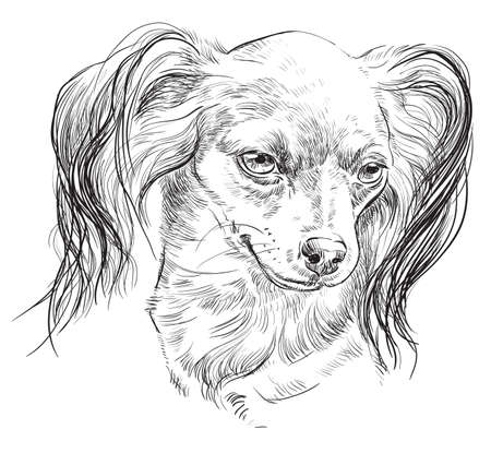 Vector outline portrait of Russian long-haired toy Terrier in black color hand drawing Illustration on white background