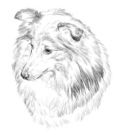 Portrait de contour vectoriel de Sheltie (Chien de berger des Shetland) à la main de couleur noire Illustration de dessin sur fond blanc Banque d'images - 82971017
