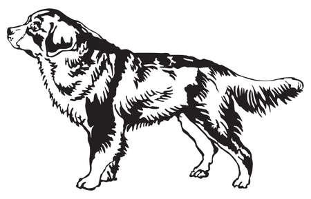 バーニーズ ・ マウンテン ・ ドッグのプロファイルに立っている、白い背景の黒い色の分離ベクトル図の装飾的な肖像画