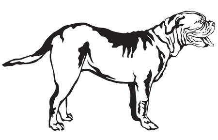 Decorative portrait of standing in profile Dogue de Bordeaux, vector isolated illustration in black color on white background Illustration