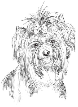 Vector outline portrait of Biewer terrier (Yorkshire Terrier) in black color hand drawing Illustration on white background