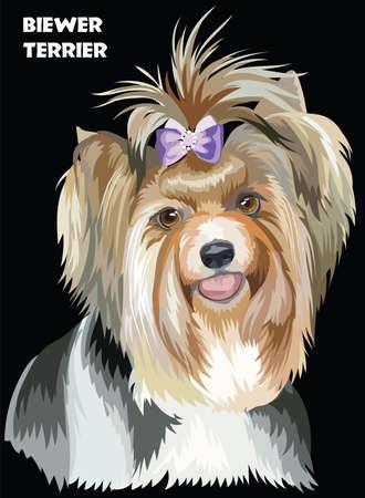 Vector Portrait of Biewer terrier (Yorkshire Terrier) in diferent color Illustration on black background Illustration