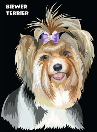 Vector Portrait of Biewer terrier (Yorkshire Terrier) in diferent color Illustration on black background Stock fotó - 83284492