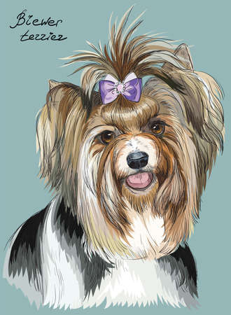 Vector colorful outline portrait of Biewer terrier, hand drawing Illustration on turquoise background