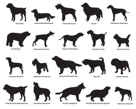 Vector set of different breeds dogs silhouettes isolated in black color on white backround  Illustration