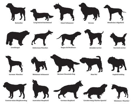 Vector conjunto de diferentes razas siluetas de perros aislados en color negro sobre fondo blanco