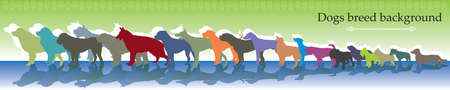 Vector background panorama with different colorful dogs breed