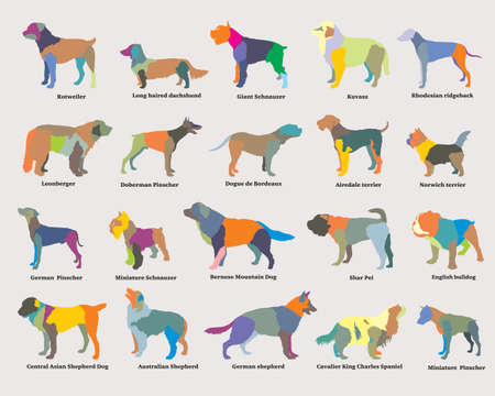 Vector set of colorful mosaic isolated different breeds dogs silhouettes on grey backround