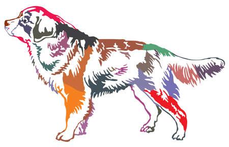 バーニーズ ・ マウンテン ・ ドッグ、白い背景の上の分離されたベクトル図のプロファイルで立っている像のカラフルな装飾的です