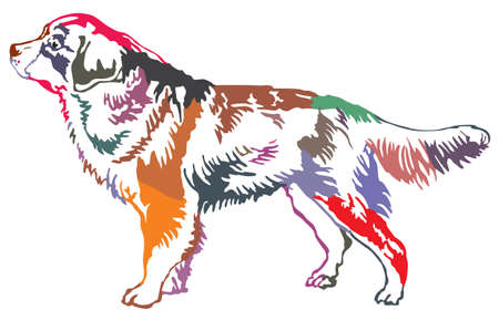 Colorful decorative portrait of standing in profile Bernese Mountain Dog, vector isolated illustration on white background