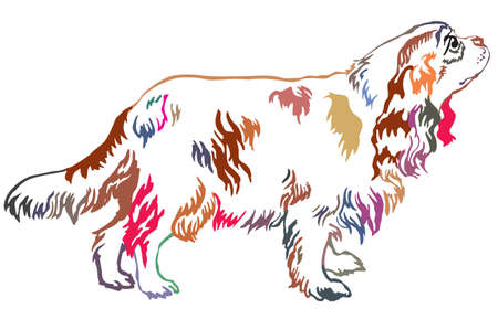 Colorful decorative portrait of standing in profile dog Cavalier King Charles Spaniel, vector isolated illustration on white background Illustration