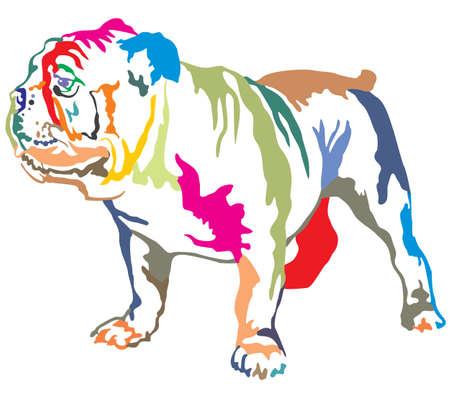Retrato decorativo colorido de pé no perfil Bulldog Inglês, ilustração vetorial isolado no fundo branco Ilustración de vector