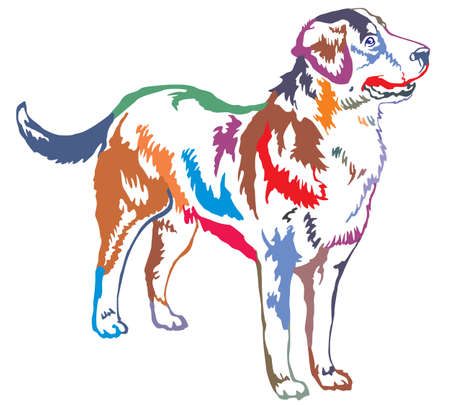 Colorful decorative portrait of standing in profile Greater Swiss Mountain Dog, vector isolated illustration on white background Illustration