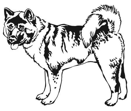 akita: Decorative portrait of standing dog.