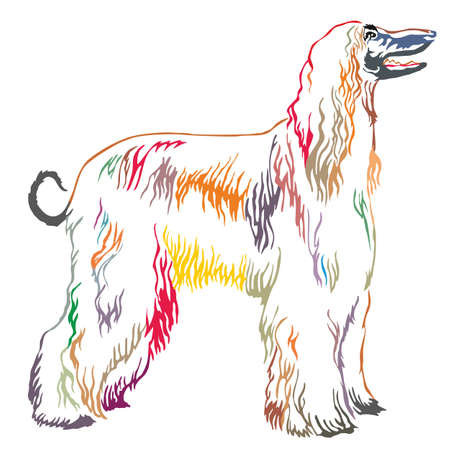 Colorful decorative portrait of standing in profile Afghan greyhound, vector isolated illustration on white background