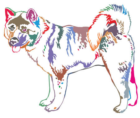 akita: Colorful decorative portrait of standing in profile Afghan greyhound, vector isolated illustration on white background