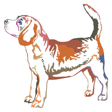 Colorful decorative portrait of standing in profile beagle, vector isolated illustration on white background