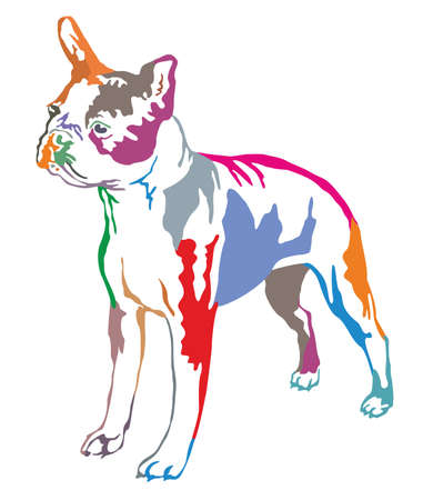 Colorful decorative portrait of standing in profile boston terrier, vector isolated illustration on white background Illustration