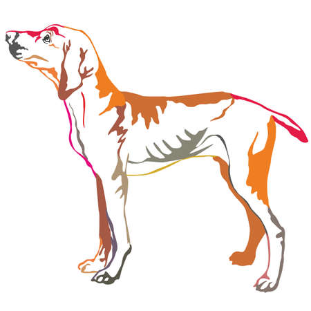Colorful decorative portrait of standing in profile  Hungarian pointer, vector isolated illustration on white background